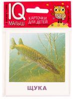Пресноводные рыбы. Набор карточек для детей