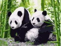 """Картина по номерам """"Две панды"""" (400x500 мм; арт. MG195)"""