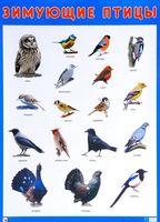 Зимующие птицы. Плакат