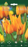 """Тюльпан ботанический многоцветковый """"Шогун"""""""