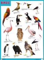 Birds. Плакат