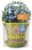 """Набор для выращивания растений """"Незабудка голубая"""" (арт. hpd-4)"""