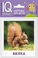Кто живёт в лесу? Набор карточек для детей