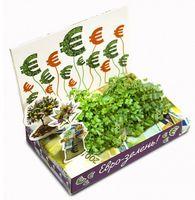 """Набор для выращивания растений """"Живая открытка. Евро-зелень"""""""
