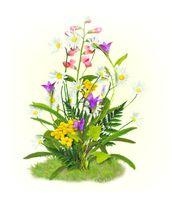 """Набор для вышивания """"Цветы полевые"""""""