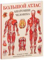 Большой атлас анатомии человека (м)