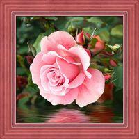 """Алмазная вышивка-мозаика """"Роза у воды"""" (250х250 мм)"""