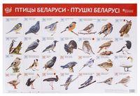 Птицы Беларуси. Птушкі Беларусі