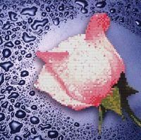 """Алмазная вышивка-мозаика """"Белая роза"""" (250х250 мм)"""