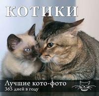 Календарь. Котики. Лучшие кото-фото. 365 дней в году (Оформление 2)