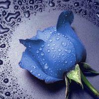 """Алмазная вышивка-мозаика """"Синяя Роза"""""""