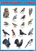 Развивающие плакаты. Зимующие птицы